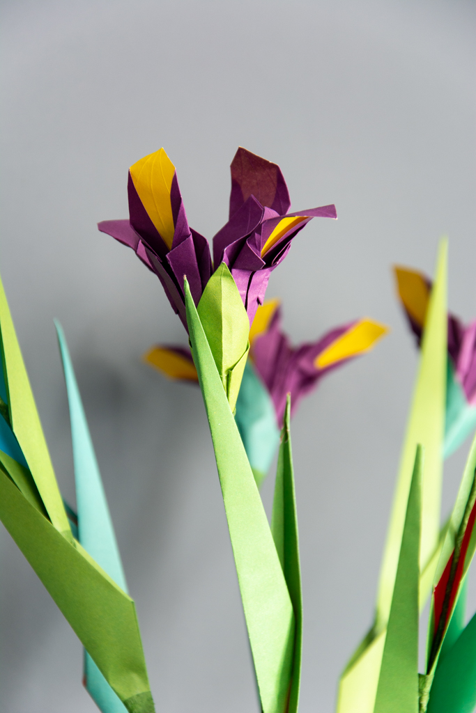 dutch iris (5 of 8)